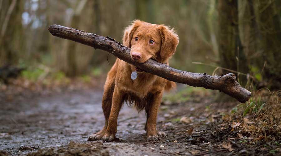 Addestrare un cucciolo da piccolo